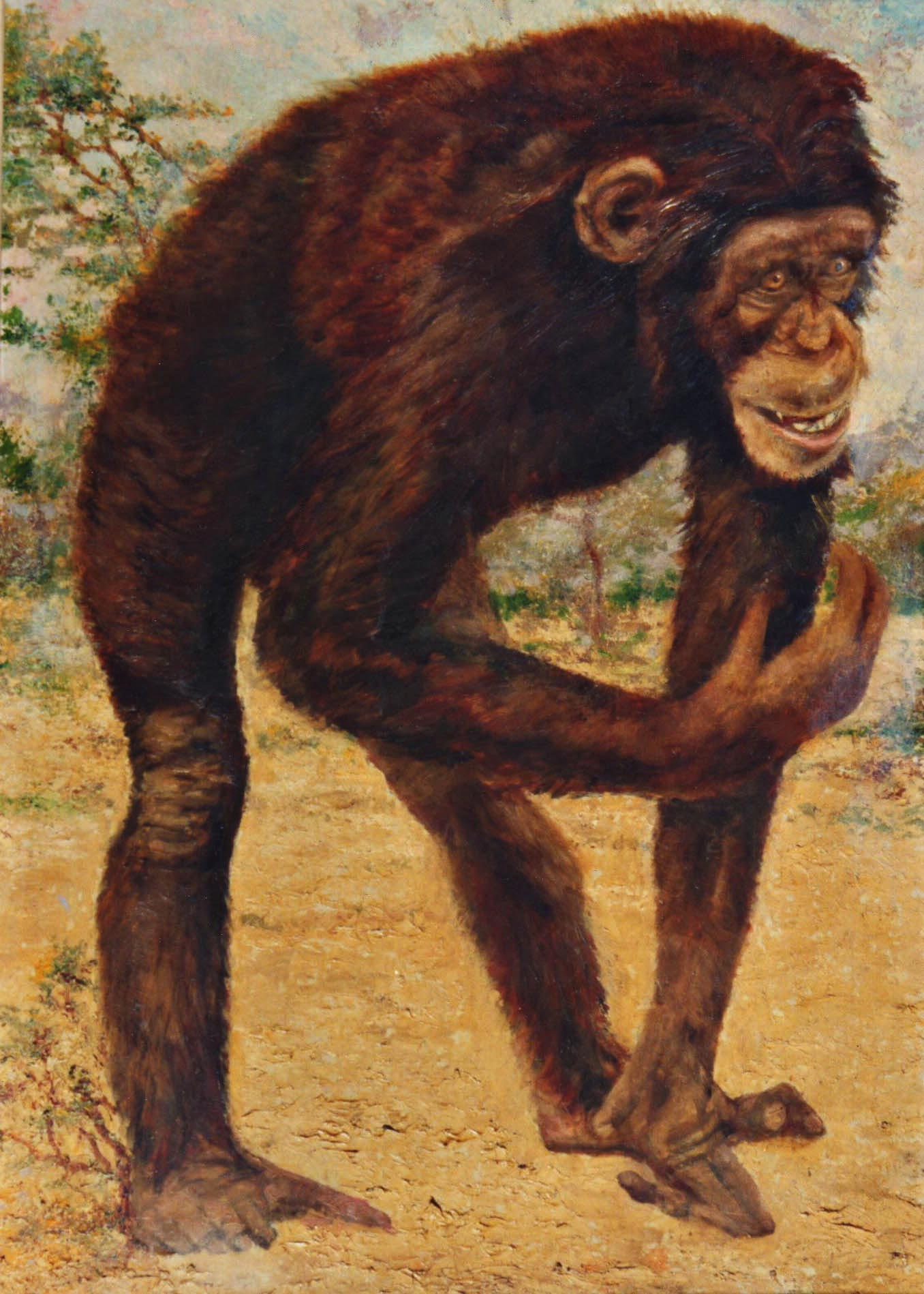 quadri africani animali scimpanzé olio su faesite Sabbatino