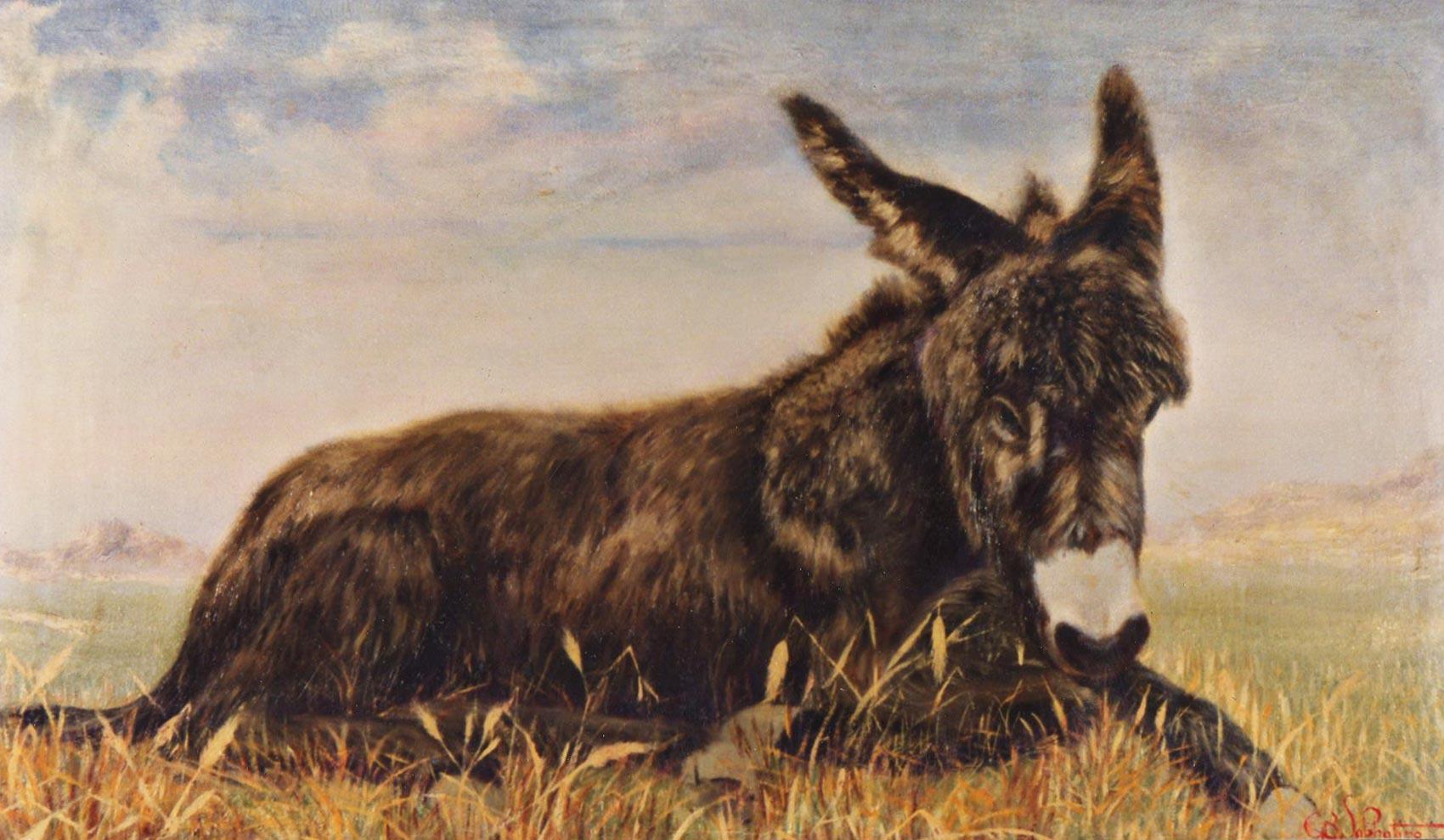 quadri animali asino olio tela Sabbatino