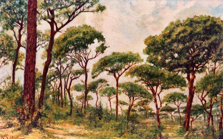 quadro africano paesaggio alberi foresta Sabbatino
