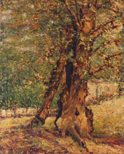quadri albero paesaggio olio tela Sabbatino
