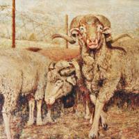 quadri animali montone olio tela Sabbatino